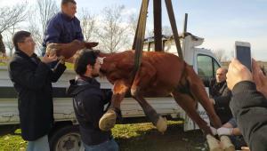 Ölüme terk edilen at hayata tutundu