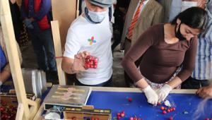 Başkan Soyer Kemalpaşa'da 250 gönüllüyle kiraz hasadını başlattı