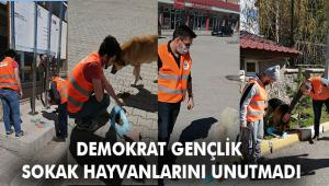 Demokrat Gençlik, sokak hayvanlarını unutmadı