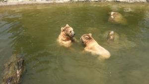 Hayvanat Bahçesi yeni sosyal hayata hazır