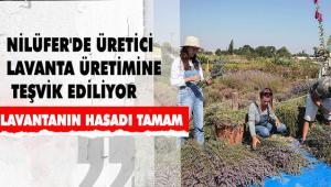 NİLÜFER'DE ÜRETİCİ LAVANTA ÜRETİMİNE TEŞVİK EDİLİYOR