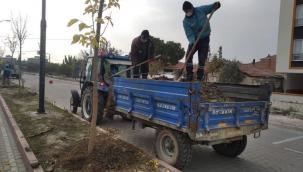 Akhisar Ring Yolu Orta Refüjünde Ağaçlandırma