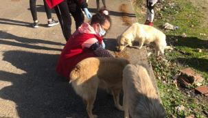 Gönüllüler sokak hayvanları için sahada