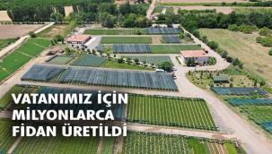 Yeşil Vatan İçin 273 Milyon Fidan Üretildi